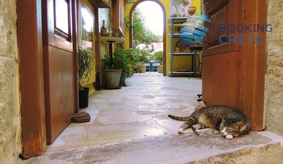 Chania cat