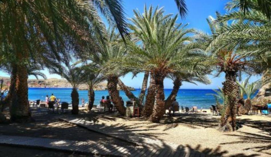 siteia-palm-beach