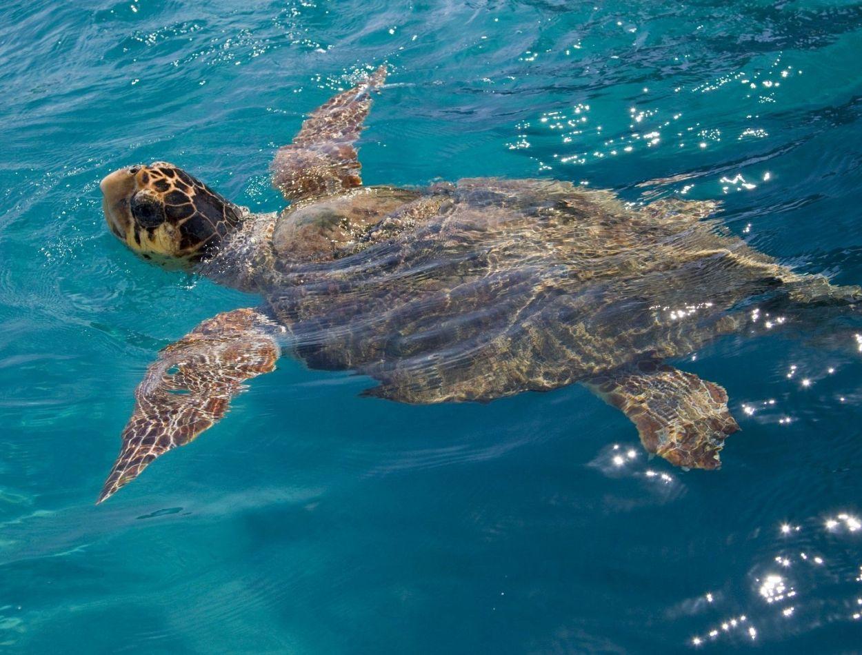 matala-turtles